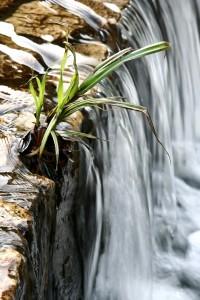 Feng Shui növény